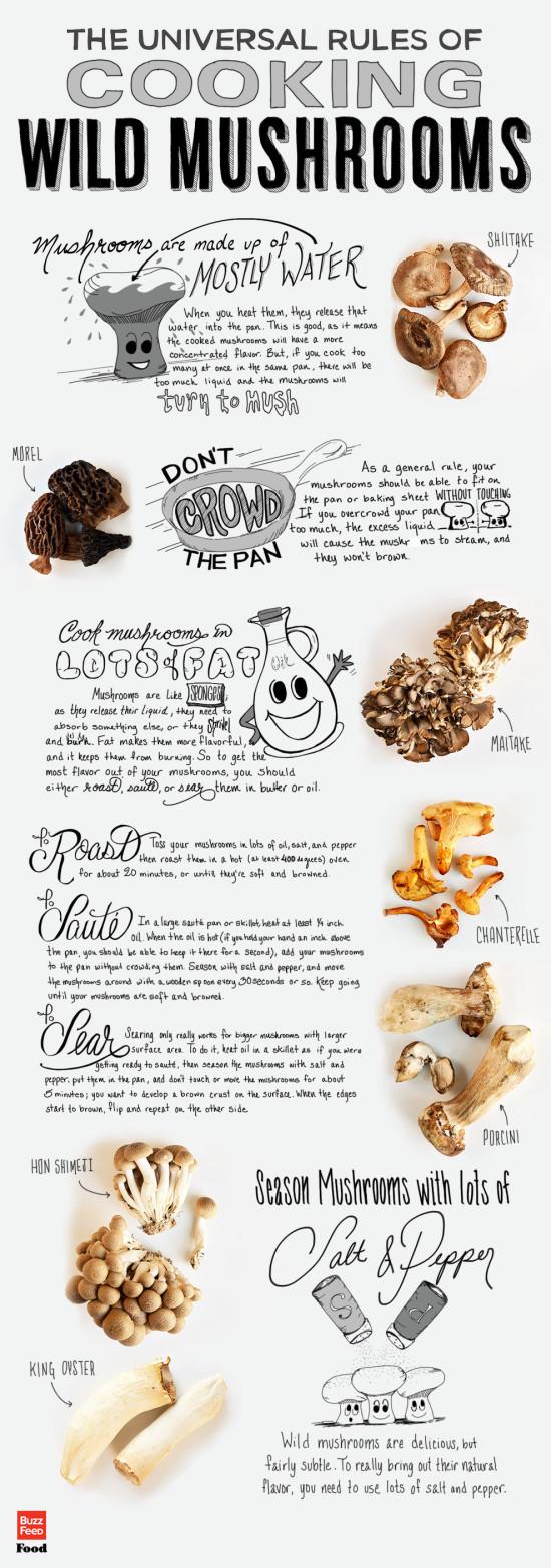 houby infografika